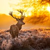 Animals fog deer HD wallpaper