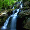 Nature forest waterfalls HD wallpaper