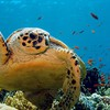 Ocean animals turtles HD wallpaper