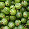 Gooseberry macro HD wallpaper