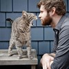 Cats animals men beard HD wallpaper