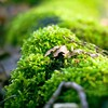 Close-up macro nature  HD wallpaper