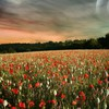 Landschaften Blumen skyscapes  HD wallpaper