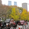 Central Park Manhattan New York City Stadtlandschaften  HD wallpaper