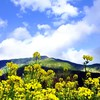 Mountains clouds landscapes flowers hills yellow skies HD wallpaper