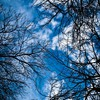 Blue skies branches clouds trees HD wallpaper