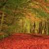 Autumn forests green leaves red HD wallpaper