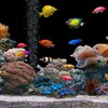 Screen savers aquarium fish plants HD wallpaper