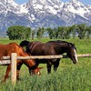 Animals eating fences grass horses HD wallpaper