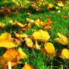 Autumn fallen leaves grass HD wallpaper