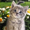 Animals animal world cats nature versus HD wallpaper