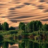 Land landscapes nature sand trees HD wallpaper