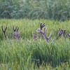Animaux bois cerfs fields herbe  HD wallpaper