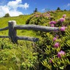 Fences flowers grass land landscapes HD wallpaper