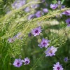 Flowers grass macro HD wallpaper
