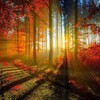 Nature red forest sunlight roads leaf autunm HD wallpaper