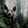 Animals forests nature panda bears pigs HD wallpaper