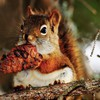 Animals cones nature squirrels HD wallpaper