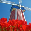 Amsterdam blue skies red flowers tulips windmills HD wallpaper