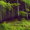 Green trees dark forests mysterious HD wallpaper