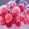 Frost fruits grapes HD wallpaper