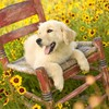 Hunde Golden Retriever  HD wallpaper