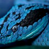 Blue reptiles snakes HD wallpaper