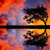 Landscapes reflections trees HD wallpaper
