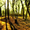 Park in the morning HD wallpaper