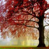 nature arbres verts scolaire jaune rouge vibrant  HD wallpaper