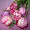 Bouquet of pink tulips HD wallpaper
