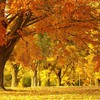 Landschaften Natur Herbst (Saison) forest  HD wallpaper