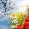 Winter into spring HD wallpaper