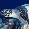 Natur Tiere sealife  HD wallpaper
