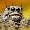 Animals spiders HD wallpaper