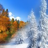 Fall to winter HD wallpaper