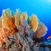 Tropical fish and corals HD wallpaper