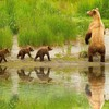 Cute bear family HD wallpaper