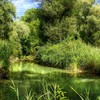 Green forest and river hdr HD wallpaper