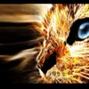 Animals cats digital art feline fire HD wallpaper