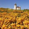 Beach oregon wildflowers HD wallpaper