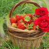 Basket of strawberries HD wallpaper