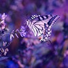Beautiful butterfly and flowers HD wallpaper