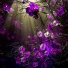 Purple sprigs HD wallpaper
