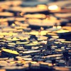 Abstract broken glass depth of field HD wallpaper