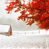Autumn and winter HD wallpaper