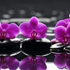 Water flowers stones selective coloring reflections orchids pink HD wallpaper