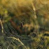 Spiders arachnids HD wallpaper