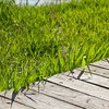 Green grass bois de nature  HD wallpaper