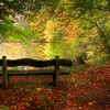 Bench lakes leaves nature trees HD wallpaper